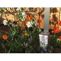 Balkonkraft Pellets mit Kompost für Homegardening Zeolith Pflanzen Tulpen