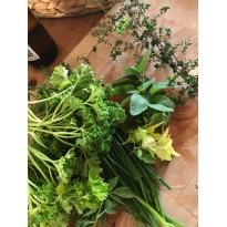 Balkonkraft Pellets mit Kompost für Homegardening Zeolith Kräuter Pflanzen