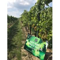 Zeolith für Weinbau unterstützt die Urkraft des Weinstocks STEINKRAFT