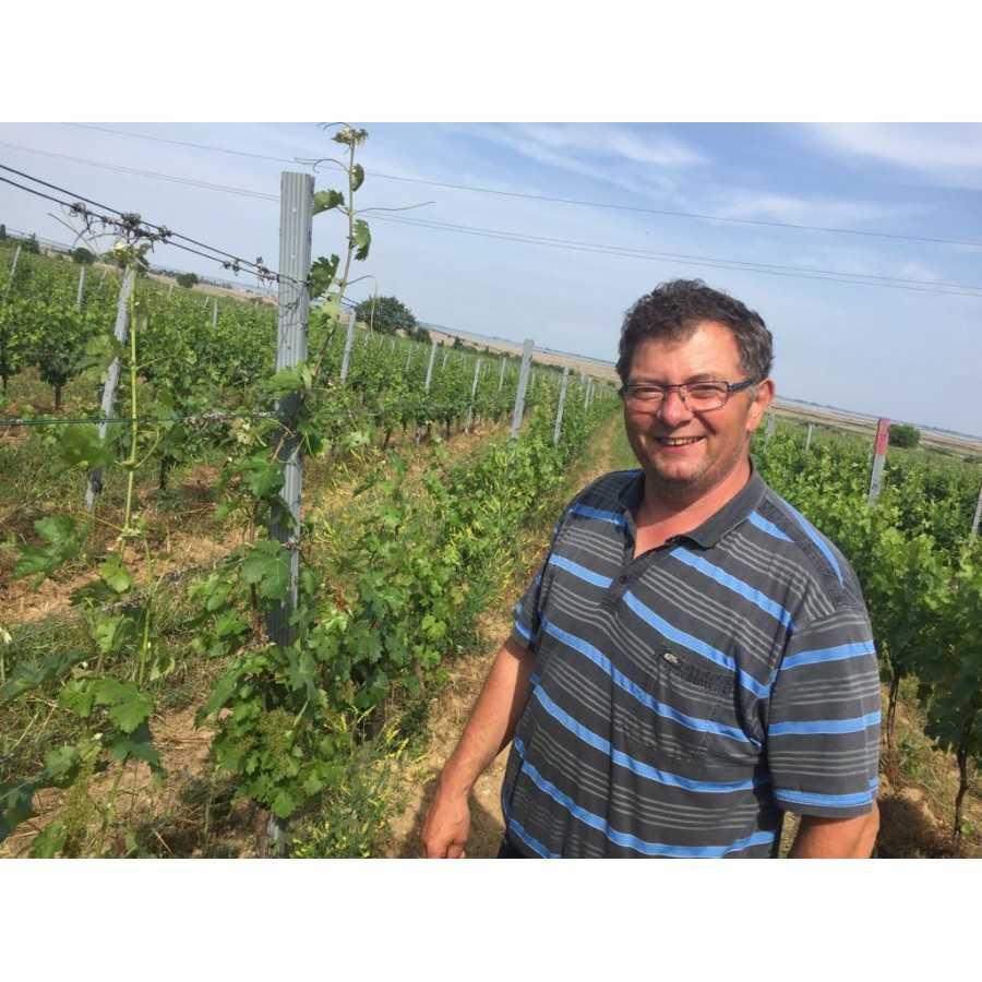 Bio-Weingut im Burgenland hat gute Ergebnisse mit WEINKRAFT Zeolith Magnesium-Kalk