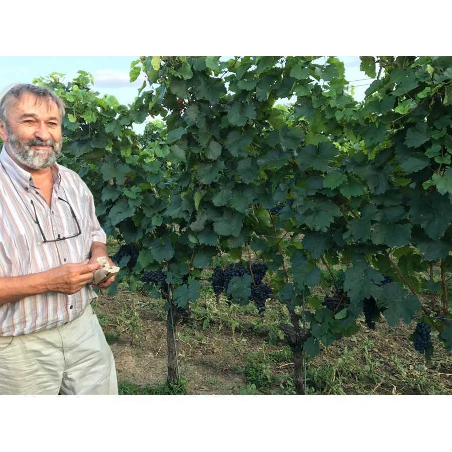 Weingut Silvia Heinrich Burgenland - Weinstock mit WEINKRAFT GESTEINSMEHL mit Zeolith wirkt lebendiger und kräftiger
