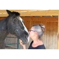 Weniger Fliegen und leichteres Ausmisten dank HORSEKRAFT Einstreu für Pferdeboxen.