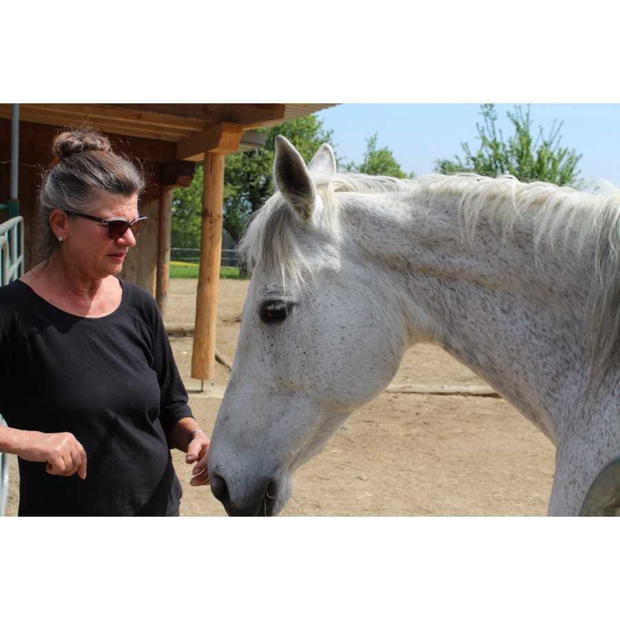 Pferdeliebhaber wählen STEINKRAFT Zeolith für ihre sauberen Boxen.