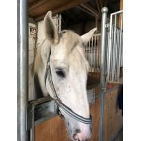 STEINKRAFT ZEOLITH für Pferde - Wasenhof