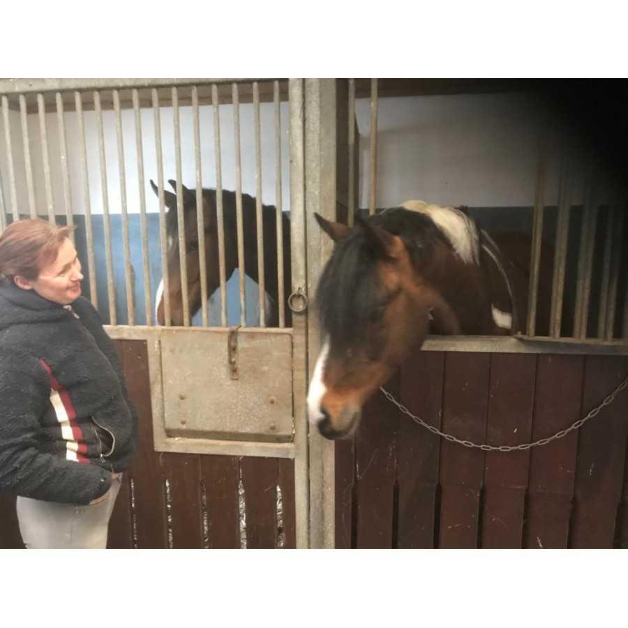Pferde und deren Besitzer lieben STEINKRAFT Zeolith Pellets