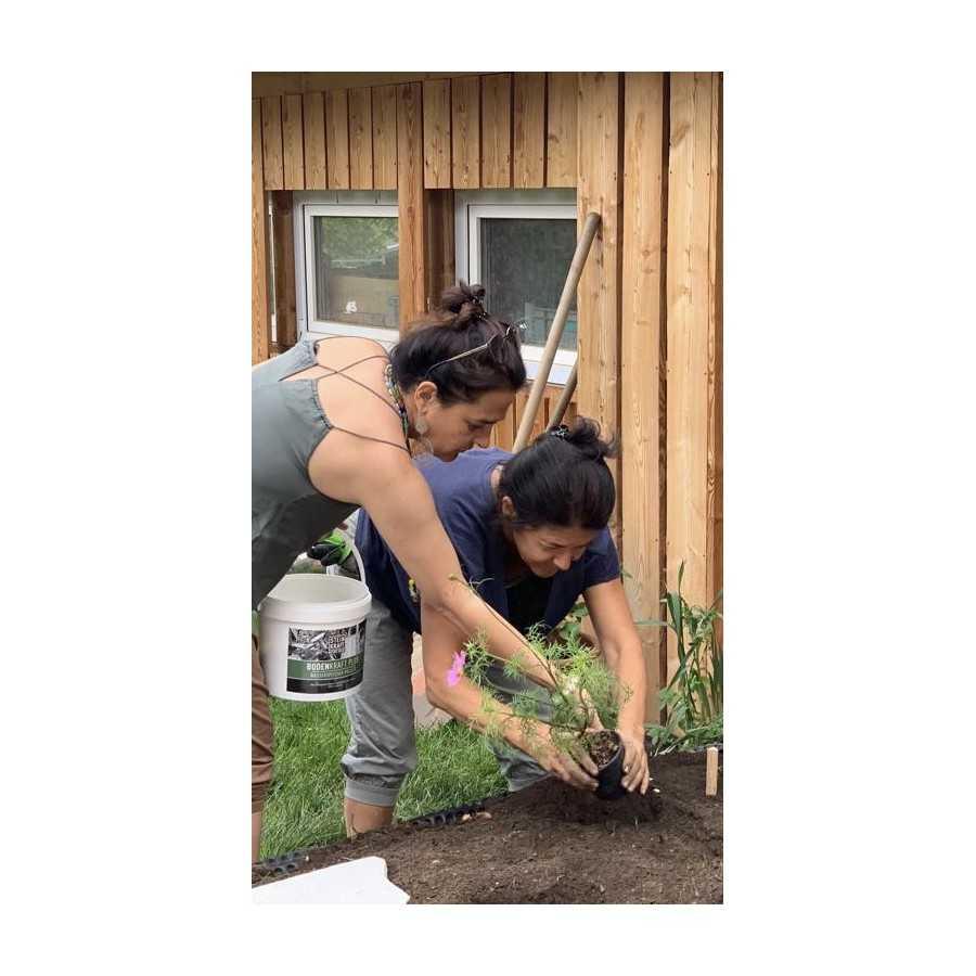 Pflanzen lieben Zeolith_warum Zeolith in den Boden geben