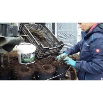 Großgärtnereien wissen um die Vorteile von Zeolith und Vermiculit
