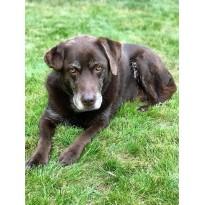 STEINKRAFT Zeolith als Unterstützung für ältere Hunde